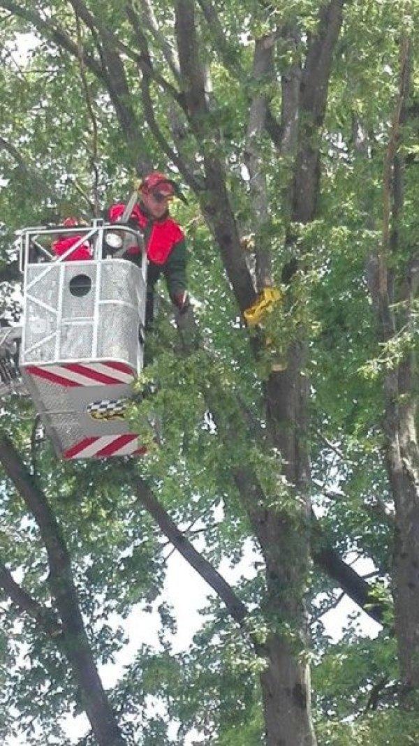 Technische Hilfeleistung vom 11.08.2018  |  (C) Feuerwehr Bad Reichenhall (2018)
